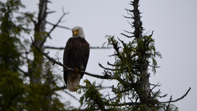Betty took this photo near Ketcikan